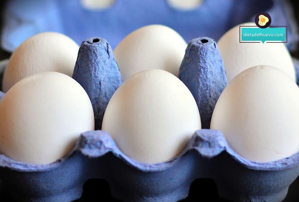 componentes del huevo