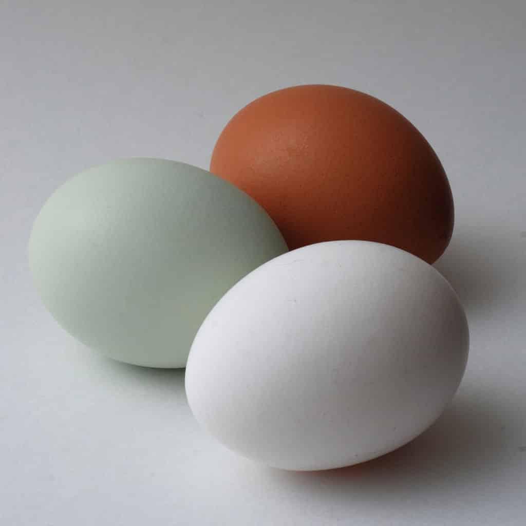 huevo araucano