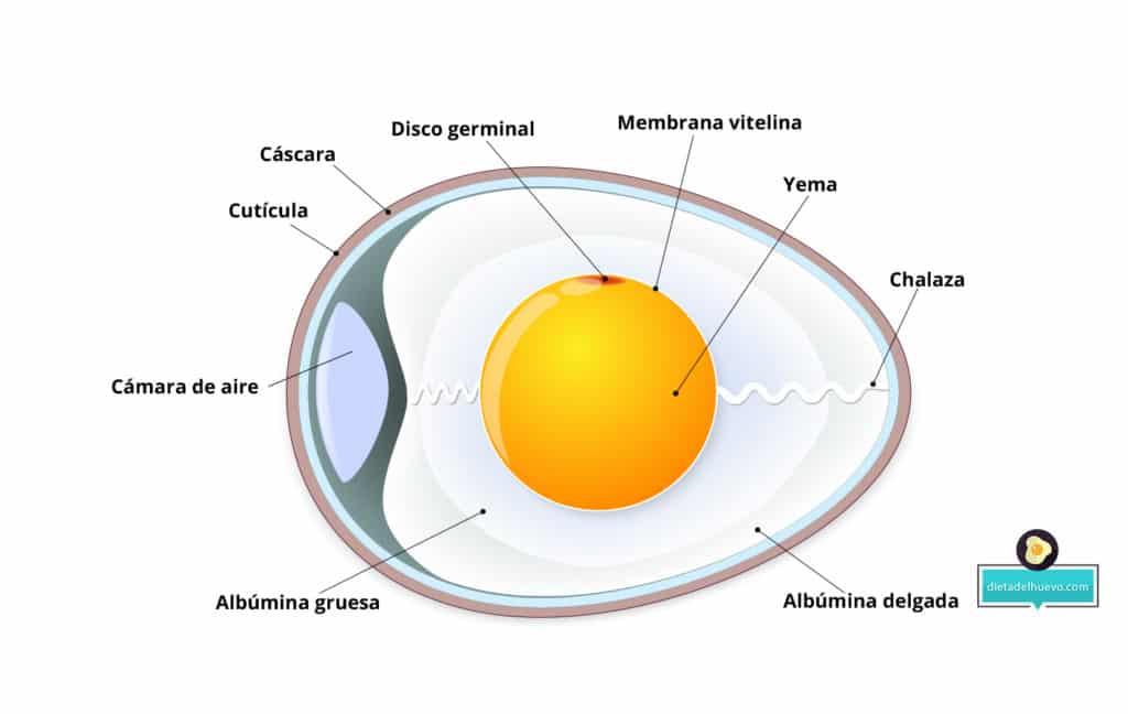 composicion del huevo