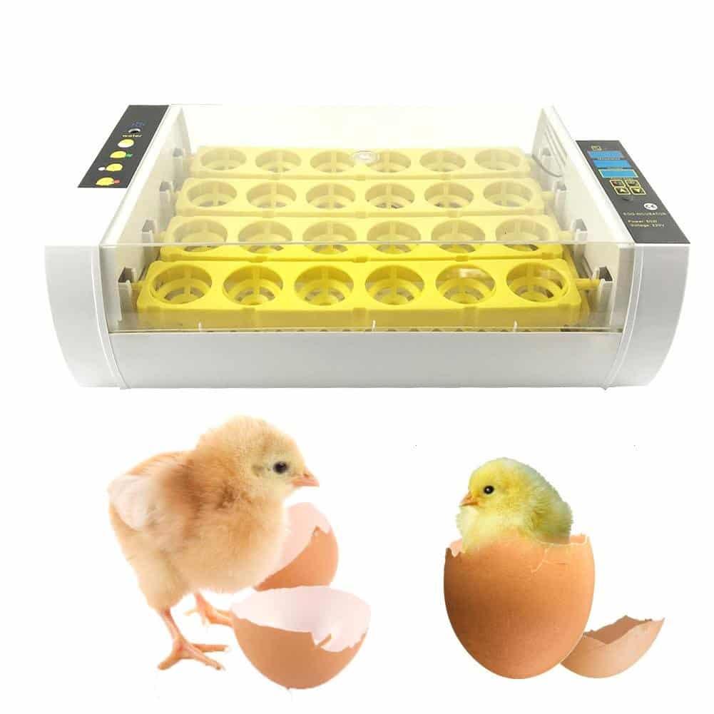 incubadoras de huevos