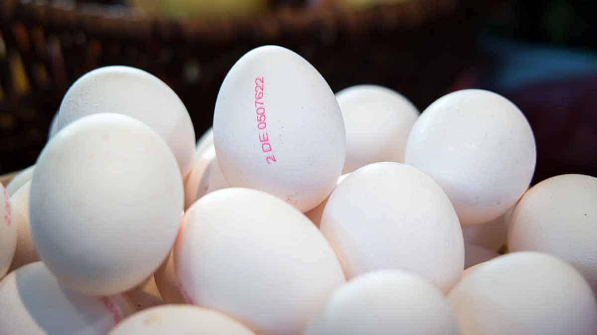 alta demanda de huevos