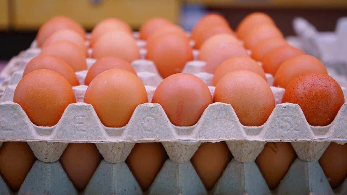 color de los huevos de gallina