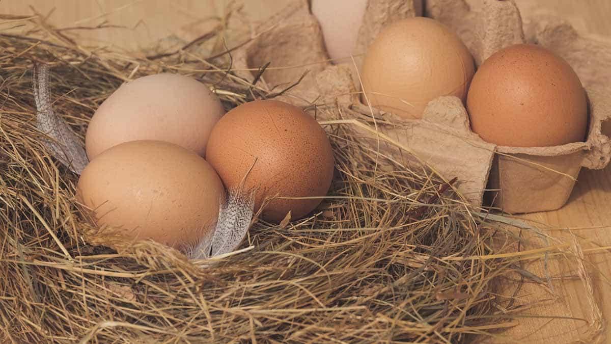 huevos industriales