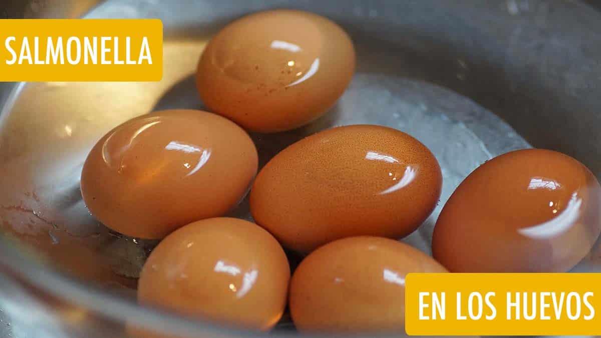 salmonella en el huevo