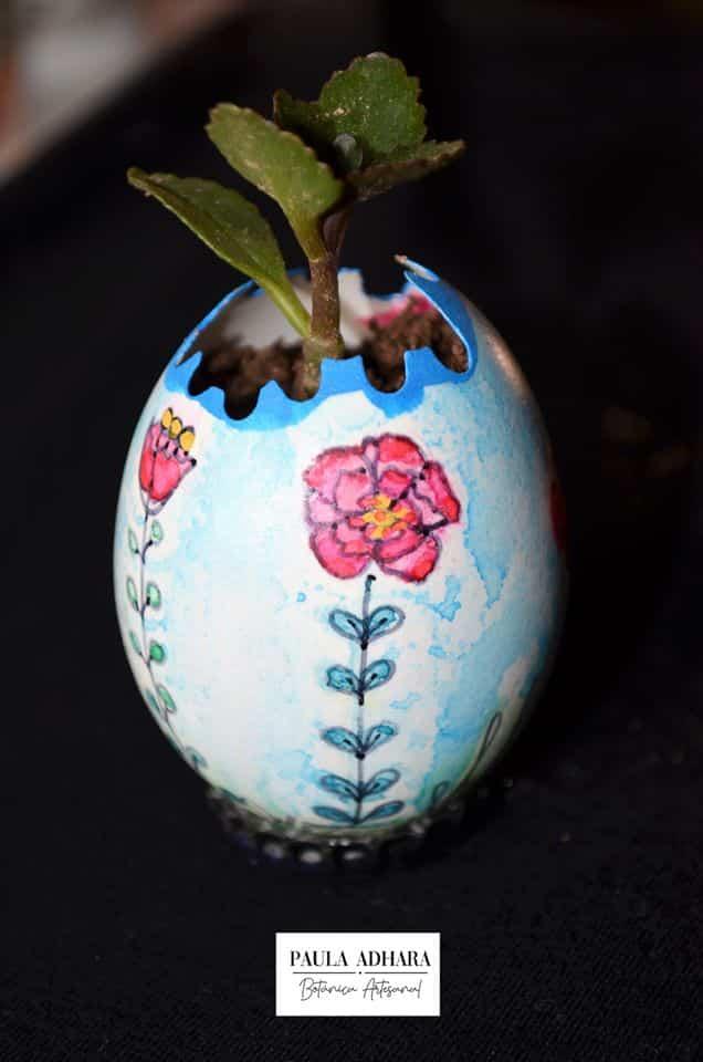 sembrar plantas en cascaras de huevo