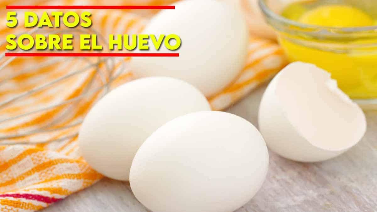 datos sobre el huevo
