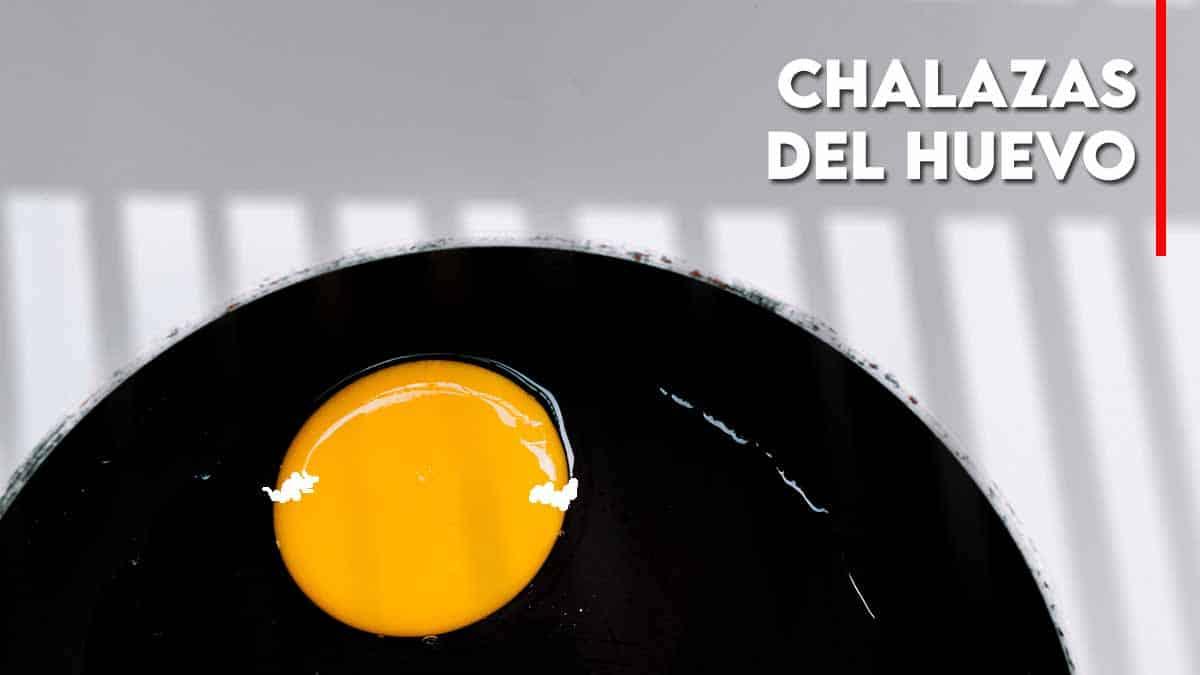 chalazas del huevo
