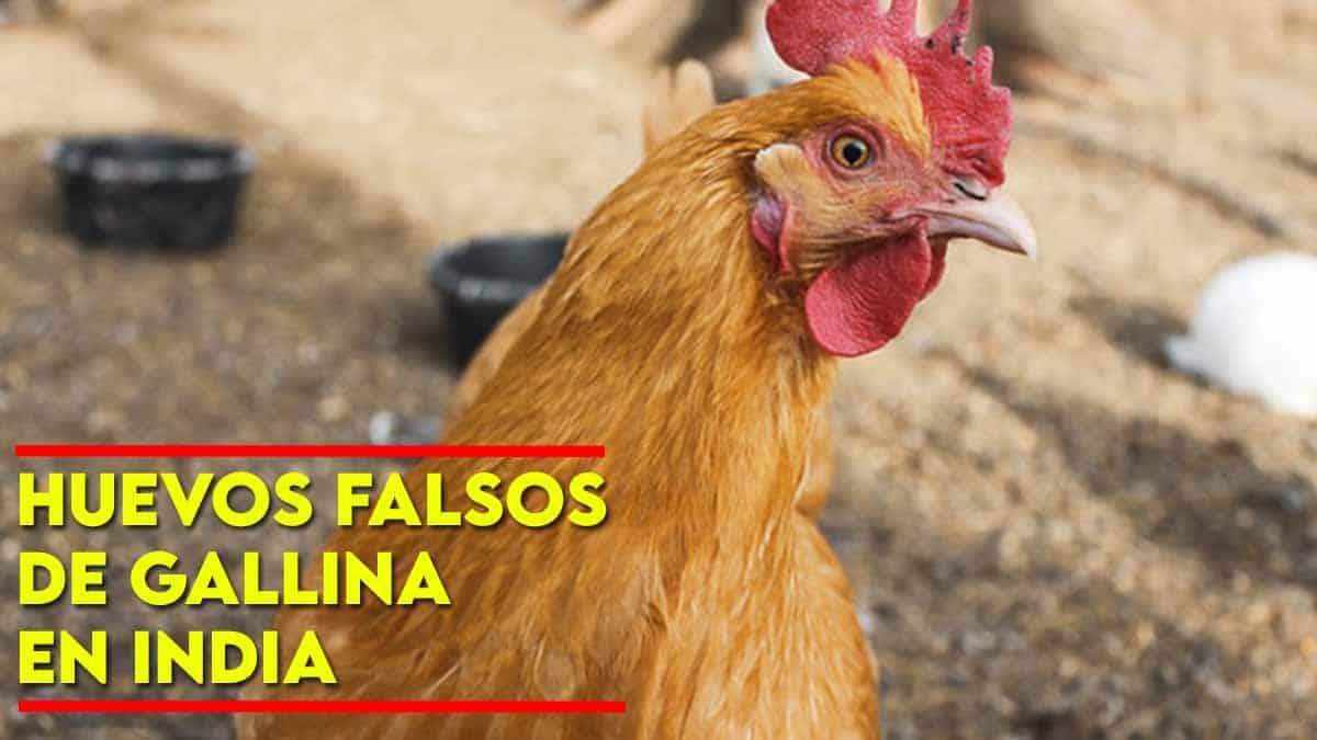 huevos falsos de gallina