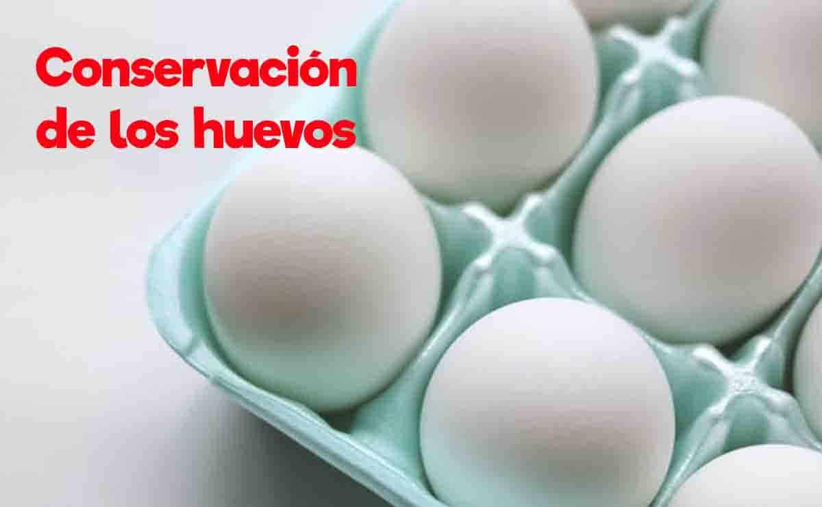manejo del huevo