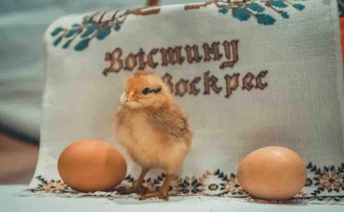 producción de huevos en Nueva York 2020
