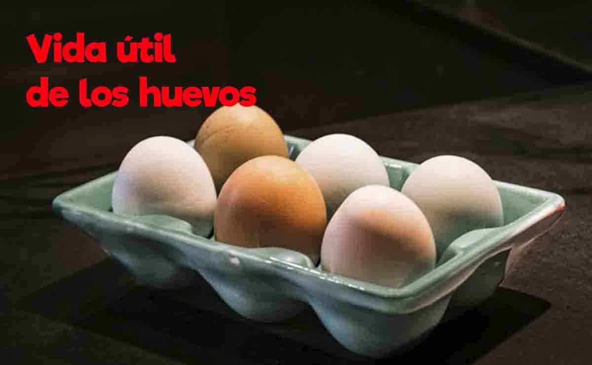 vida util de los huevos